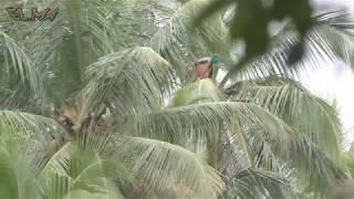 18 Природа Шри Ланки Индийские мантры Hari Om Хари Ом Музыка для сна Релакс  Шум воды SriLanka